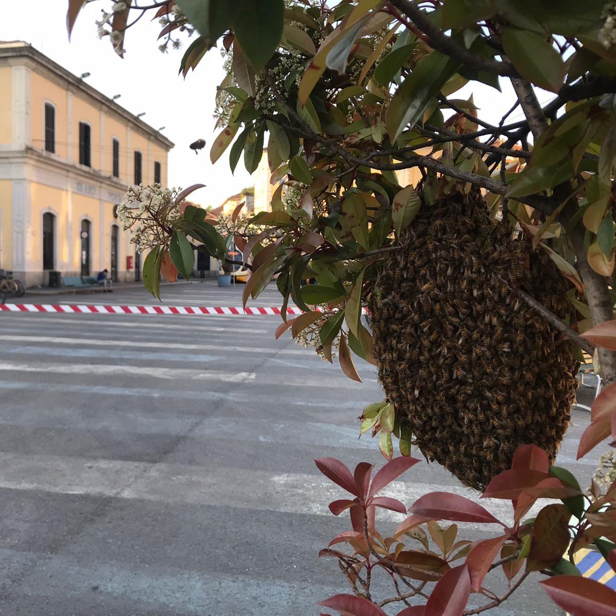 Recupero Api 24 - recupero api milano