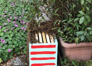 Primavera 3 - recupero api milano